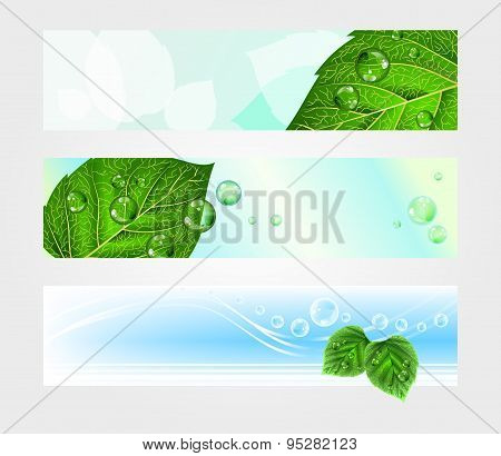 Set of headers for website with foliage, vector