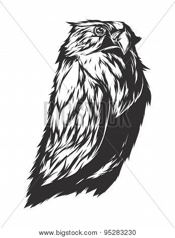Vector Illustration With Angry Owl