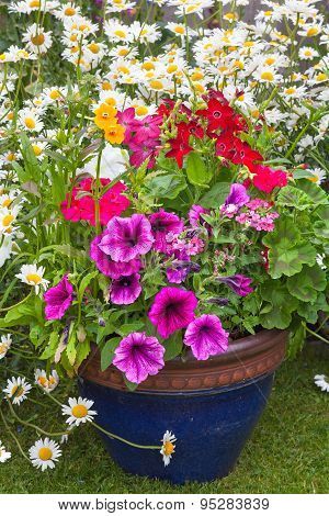 Mixed Flowers Set In A Blue Planter.