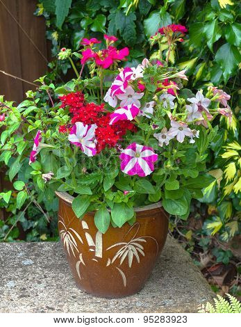 Colorful Flowers In A Pot; Petunia; Geranium; Nicotiana.