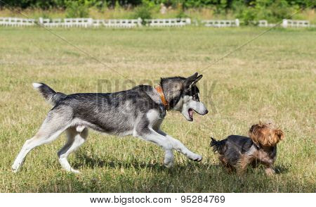 Two dogs are playing in the park.