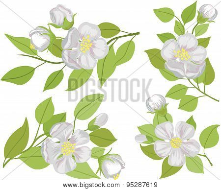 Vector set of illustrations of flowering branches of Apple.