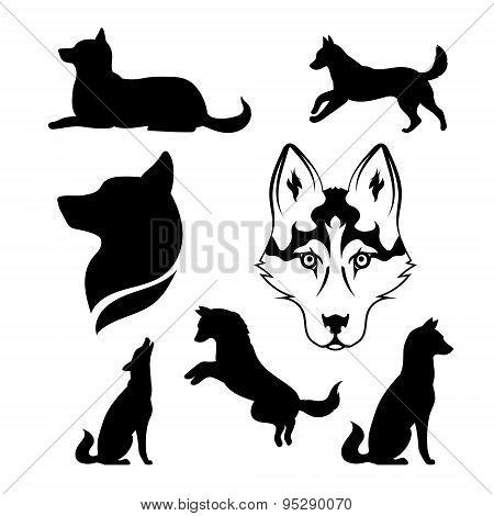 Silhouette of a dog of breed siberian husky.