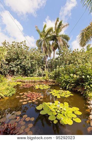 Pond in QE II Botanic Park on Grand Cayman Island