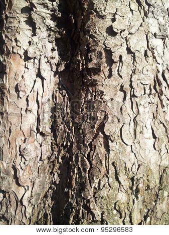 Horse Chestnut Bark