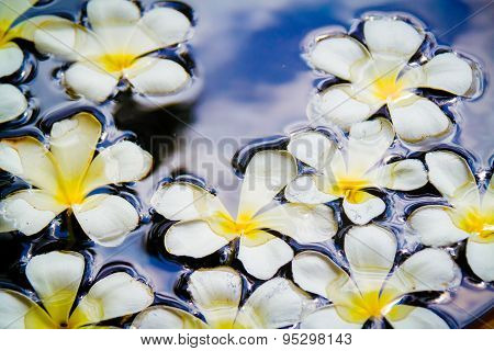Frangipani Flowers On The Water Surface