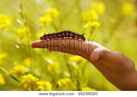 Large hairy butterfly larva crawling on arm