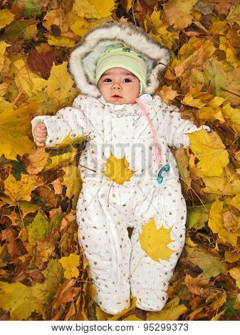 Small Child In Autumn Yellow Leaves