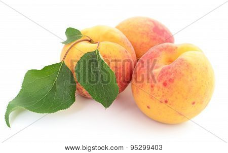 Apricots With Leaves.