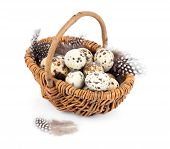 stock photo of quail  - quail eggs in a wicker basket on white background - JPG