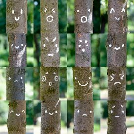 stock photo of angry smiley  - A collection of various smileys painted on tree trunks - JPG