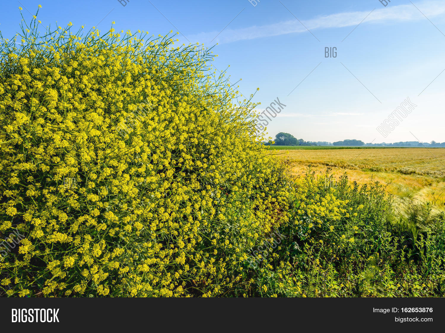 Closeup Yellow Blossoming Black Image & Photo | Bigstock