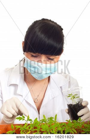 Agricultural Scientist With Cultivated Tomato