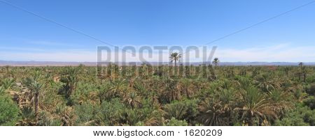 Palm Grove Of Skoura With The Amerdihil Kasbah, Morocco, Panorama