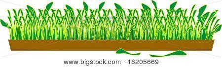 Green grass in a wide pot
