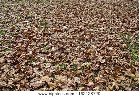 Leaves in the park that had fallen to the ground.