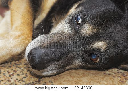 Closeup of a dog looking at something scary happening