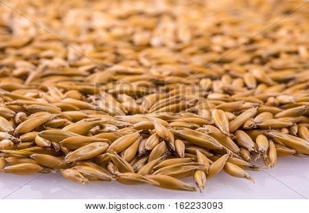 natural oat grains with shadow for background closeup shot. Heap of organic oat grains with wooden spoon healthy food and nutrition. Diet supplements oat grain. Oat grains