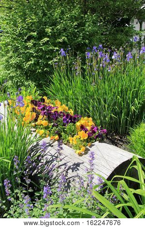 Vertical image of log that has been cut out and is now being used for a garden display, with colorful pansies peeking out.