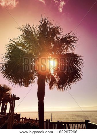 sunlight through the palm tree at sundown