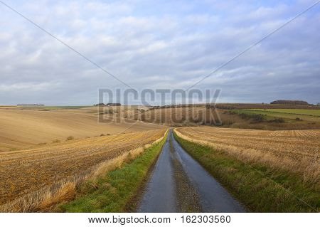 Country Road And Farmland