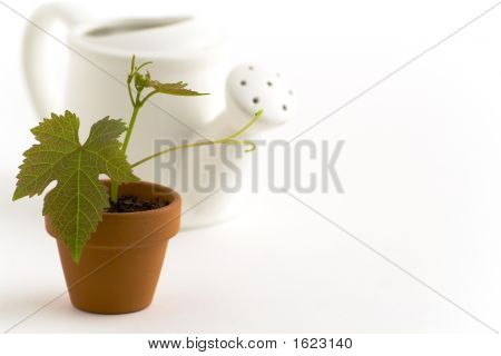 New Plant And Watering-Can