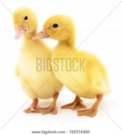 Two yellow ducklings isolated on white background.