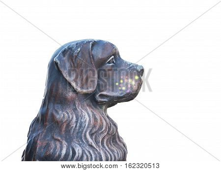 dogs bust in profile with clipping on a white background isolated