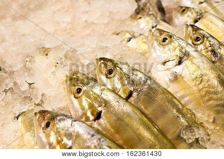 Freshly catch fish in supermarket. Big eye yellow fish