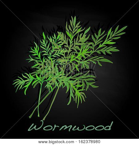 Wormwood Medical Herb. Vector.