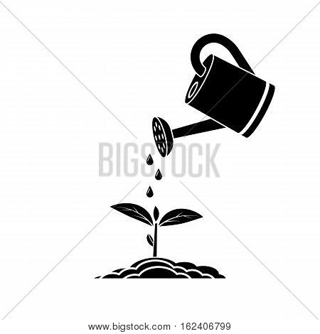 Watering Can, Plant Sprout.