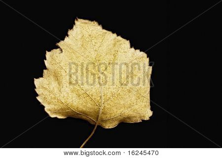 Autumn Yellow Leaf Closeup At Black Background