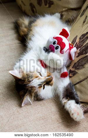 Cat with toy, the cat with a toy sleeps, the sleeping kitty has a rest after game, sleeping cat with a doll, lovely cat, fine