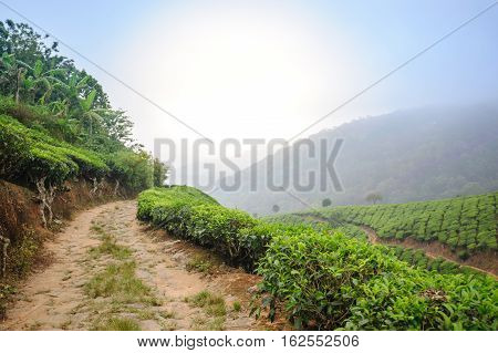 Road between tea plantation around Munnar tea estate hills in Kerala Idukki district India