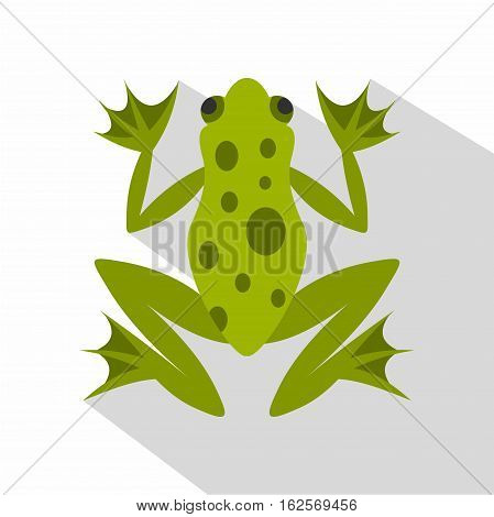 Frog icon. Flat illustration of frog vector icon for web