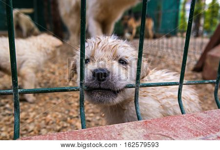 Puppy in a cage. Puppy chewing on a metal grate. In the background is seen the other dogs.