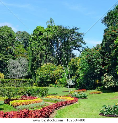 magnificent tropical park with flower beds lawns and trees