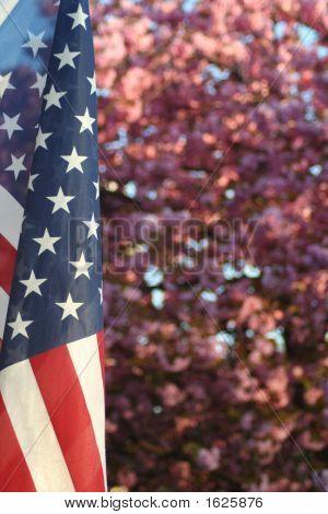 Patriotic Blossoms
