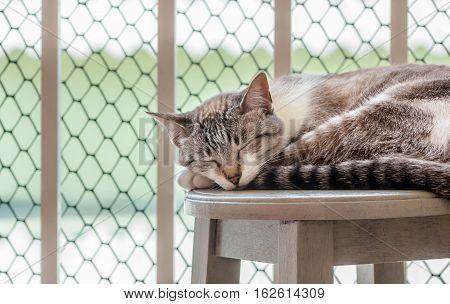 Cat sleeping on the balcony`s window on a stool