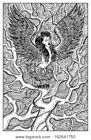 Harpy. Woman with bird wings on tree branch. Fantasy magic creatures collection. Hand drawn vector illustration. Engraved line art drawing, graphic mythical doodle. Template for card game, poster