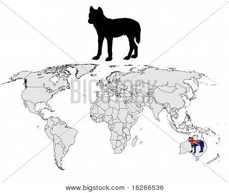 Gama de Dingo australiano
