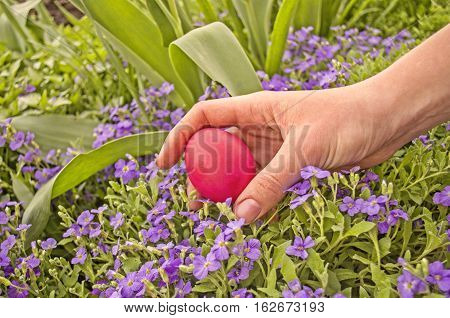 Easter egg hunt. Hand and easter eggs hidden in fresh green grass.