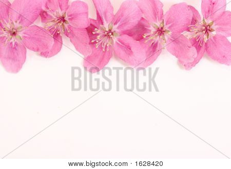 Pink Flowers Top Border
