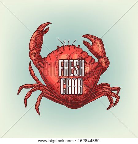 Graphic realistic crab. Vector illustration. Shellfish sketch used for logo design, banner, poster, advertising seafood, or restaurant menu.