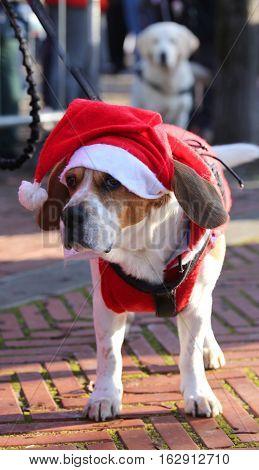 Dog With Santa Claus Dress