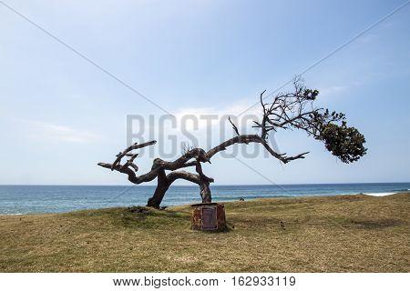 Weathered Tree On Grass Verge Against Blue Ocean Skyline