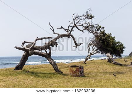 Weathered Trees On Grass Verge Against Blue Ocean Skyline