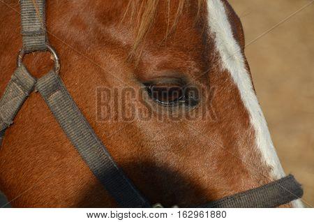 horse interested look, eye horse, eye horse closeup