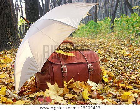 Pecho de cuero y paraguas a la izquierda en el bosque 1029_04