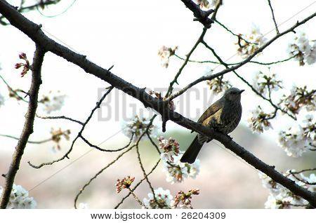 Little bird on a cherry tree